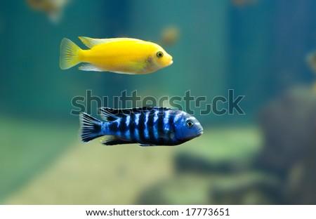 2 fish - stock photo