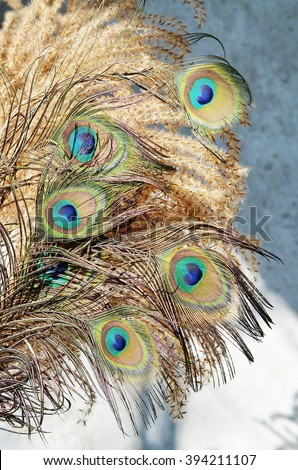Five of peacock feathers - stock photo