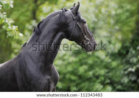 foal grazing in the field - stock photo