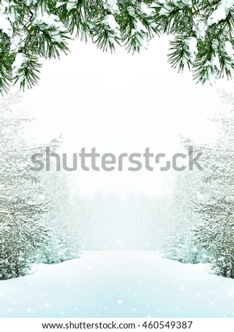 forest in the frost. Winter landscape. Snow covered trees - stock photo
