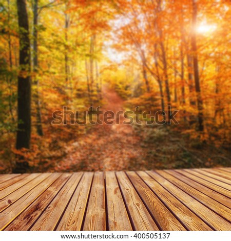 Forest Road in the autumn. Autumn Landscape. Natural blurred background. Soft light effect.  - stock photo