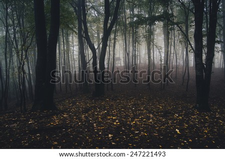 forest with yellow leaves on the ground and fog - stock photo