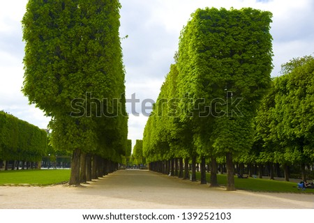 France; Paris.  Trees in the Luxembourg garden - stock photo