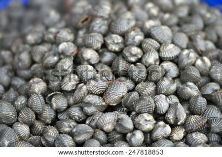 fresh cockles for sale at a market - stock photo