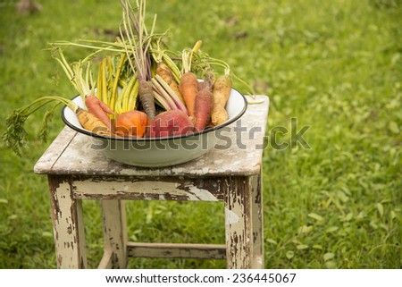 fresh colorful root vegetables in enamel bowl - stock photo