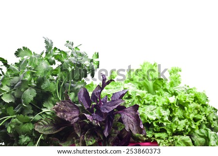 Fresh herbs isolated on white background. Basil, parsley and salad - stock photo