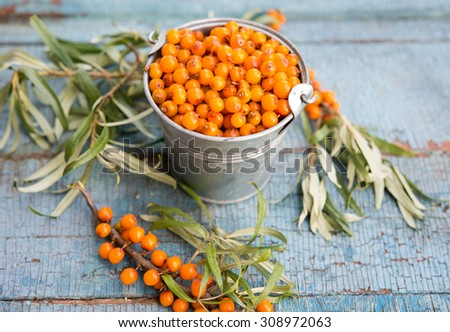 fresh sea-buckthorn - stock photo