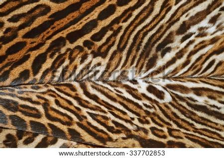 fur coat of ocelot - stock photo