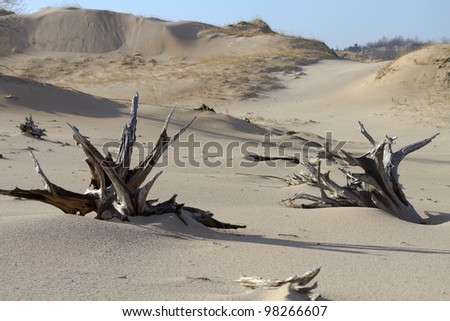 """Ghost Forest"" -- Sand Dunes - Silver Lake State Park, Mears, Michigan, USA - stock photo"