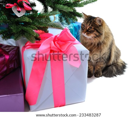 gift boxes and cat under Christmas tree. isolated on white  - stock photo