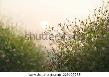 grass and flower field under the sun - stock photo