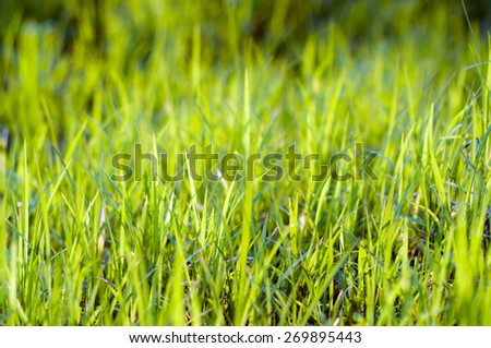 green grass natural backgrounds with beauty bokeh (Shallow Dof)  - stock photo