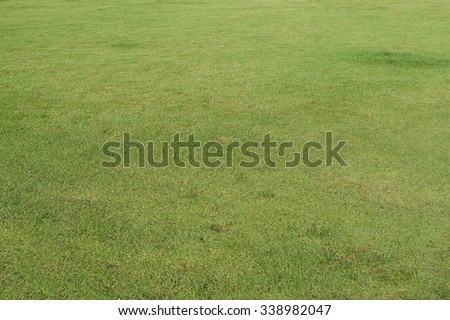 Green grasses filed - stock photo