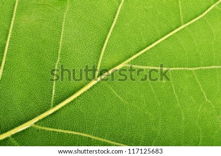 green leaf macro background - stock photo