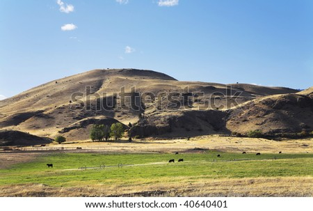Green meadows in a valley of the river Missouri and grazed black cows - stock photo