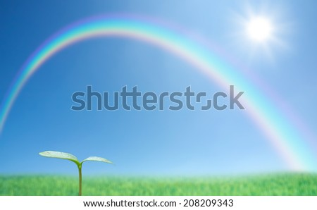 Green sprout against blue sky and rainbow - stock photo