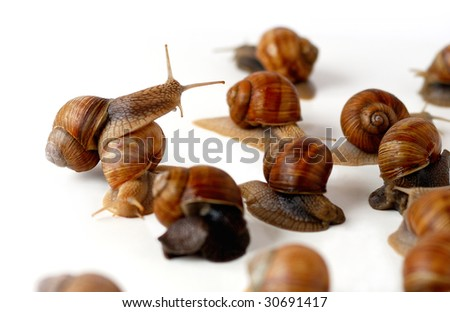 group of snails is isolated on  white background - stock photo