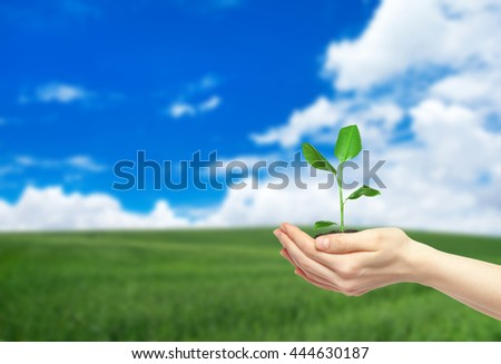 hands holding  green plant - stock photo