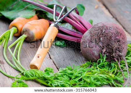 Harvest of fresh vegetables in a white box in the garden with facilities for garden - stock photo