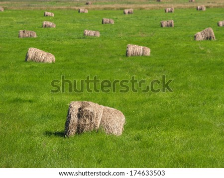 Hay bales on a green meadow  - stock photo