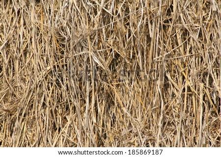 Haystack background-Indian - stock photo
