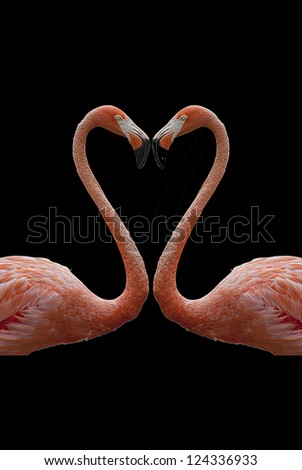 heart composed by two flamingos - stock photo