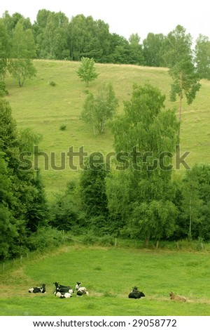 Herd of cows lies at the foot of the hill. - stock photo