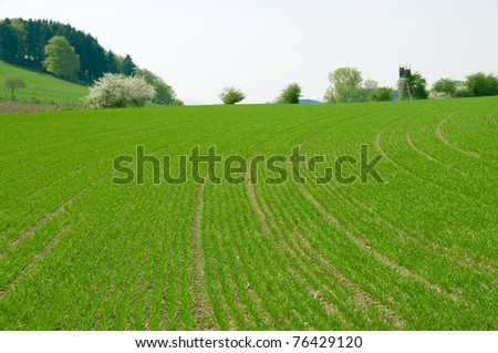 Hilly  field with the young crops. - stock photo