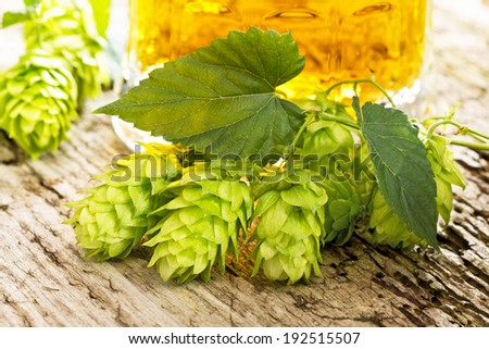 hop cones and beer - stock photo