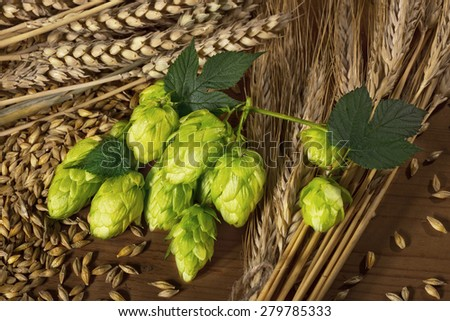hops and barley -raw material for beer production - stock photo