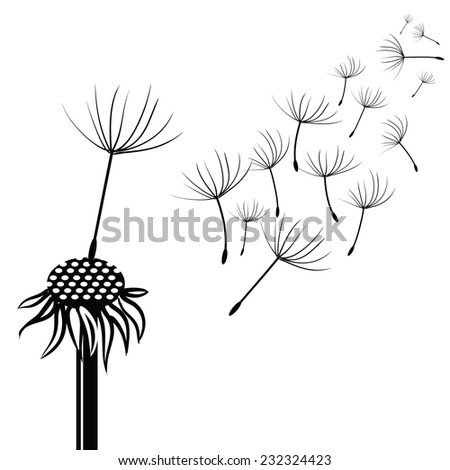 illustration with silhouette of dandelion  on a white background - stock photo