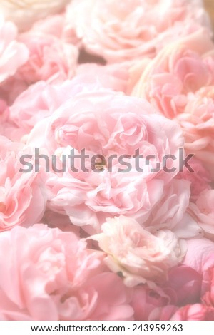 Image of beautiful pink vintage roses. - stock photo