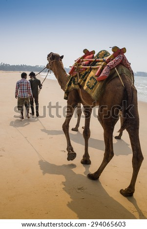 Indian cameleer - camel driver with camels  - stock photo