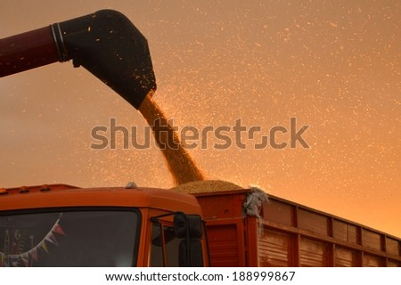 industry details of combine harvesting corn on summer or autumn afternoon evening outdoors background - stock photo