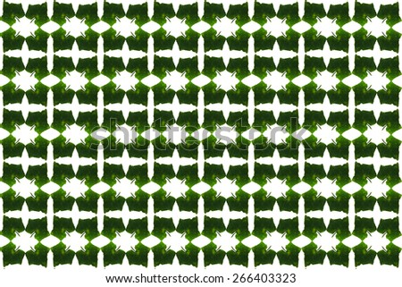 Ivy Gourd background - stock photo