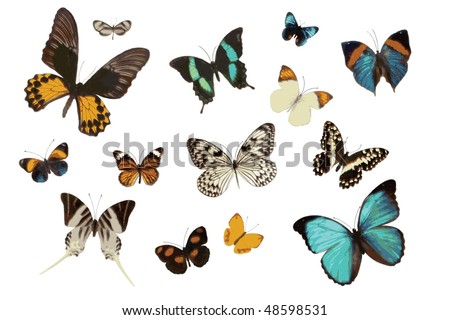 .jpg Collection of Art Butterflies - stock photo