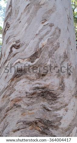 Karri Trees, West Australia        - stock photo