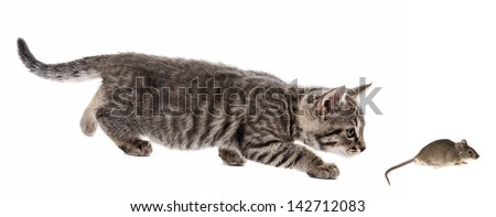 kitten and mouse isolated on a white background - stock photo