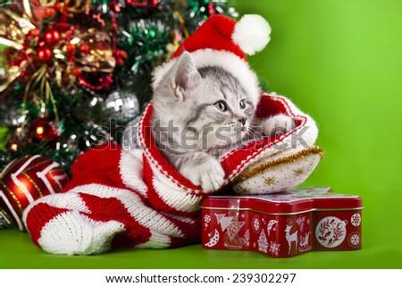 kitten christmas - stock photo