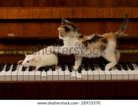 kitten with a mouse on the piano - stock photo