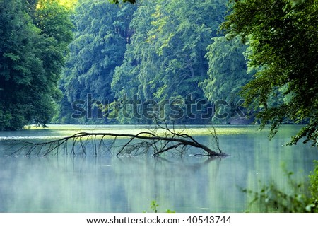 Lake morning in summer - stock photo