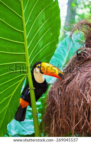 Large bird with bright plumage and a huge yellow beak. Toco toucan in the reserve of exotic tropical birds - stock photo