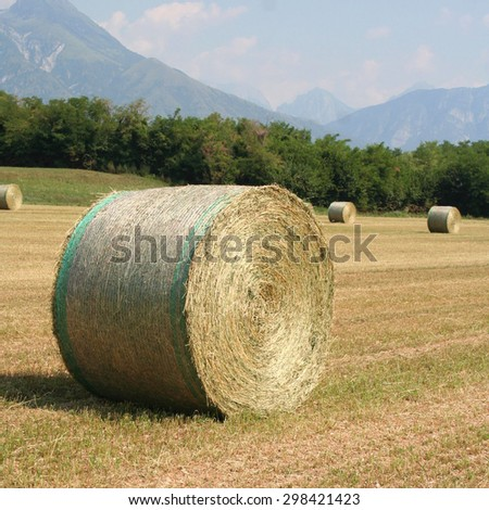 large round bales of alfalfa grass feed  on field - stock photo