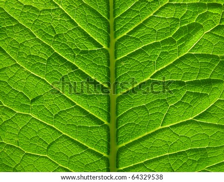 leaf surface - stock photo