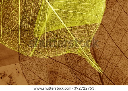 leaf texture - detail - stock photo
