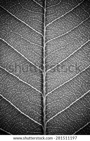leaf texture white black and white effect - stock photo