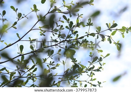 leaves and twig Tree on sky background vintage tone - stock photo