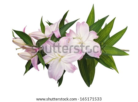 Lily isolated (with clipping path) - stock photo