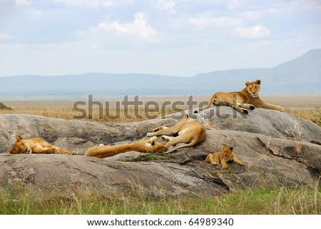 Lioness with cub are resting on the rocks - stock photo