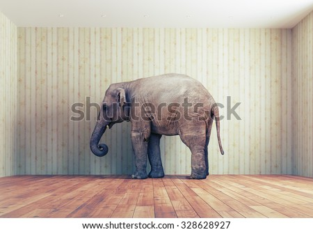 lone elephant in the room. Creative concept - stock photo